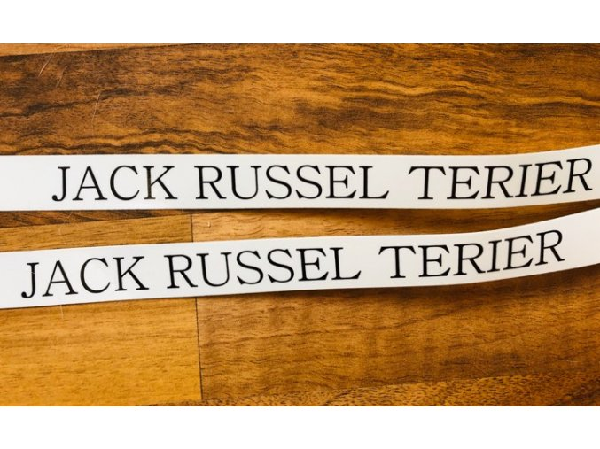 JACK RUSSEL TERIER