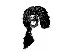 Portugalský vodní pes samolepka