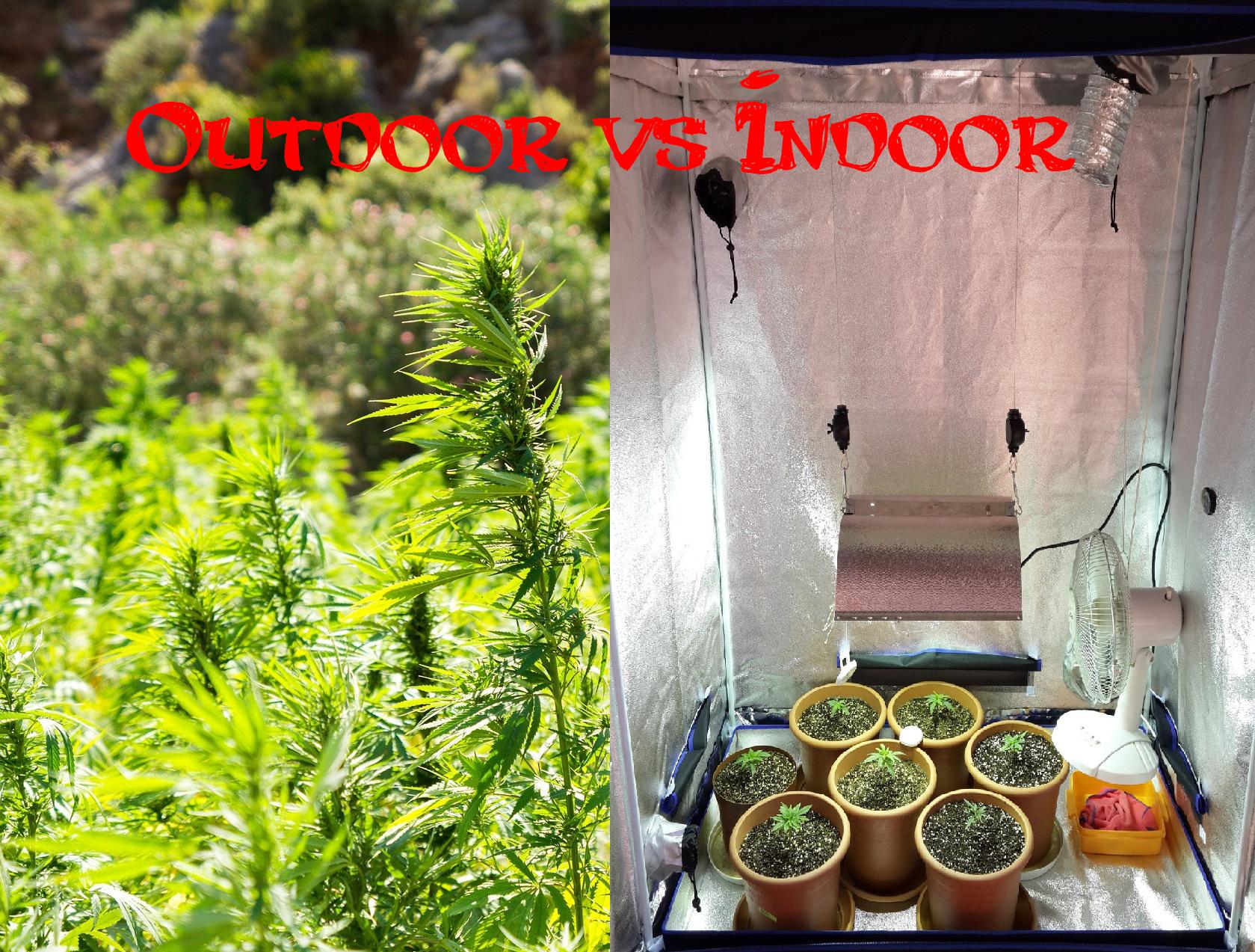 Pěstování konopí indoor vs outdoor - 3 hlavní rozdíly