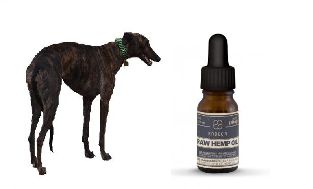 Konopný CBD olej pro zvířata