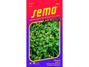 SPILANT / Spilanthes oleracea L. (Acmella oleracea (L.) R.K.Jansen)