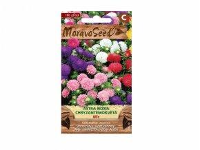 Astra čínská nízká chryzantémová, směs 00529