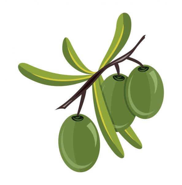 depositphotos_76539641-stock-illustration-olives