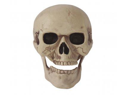Lebka 20 cm