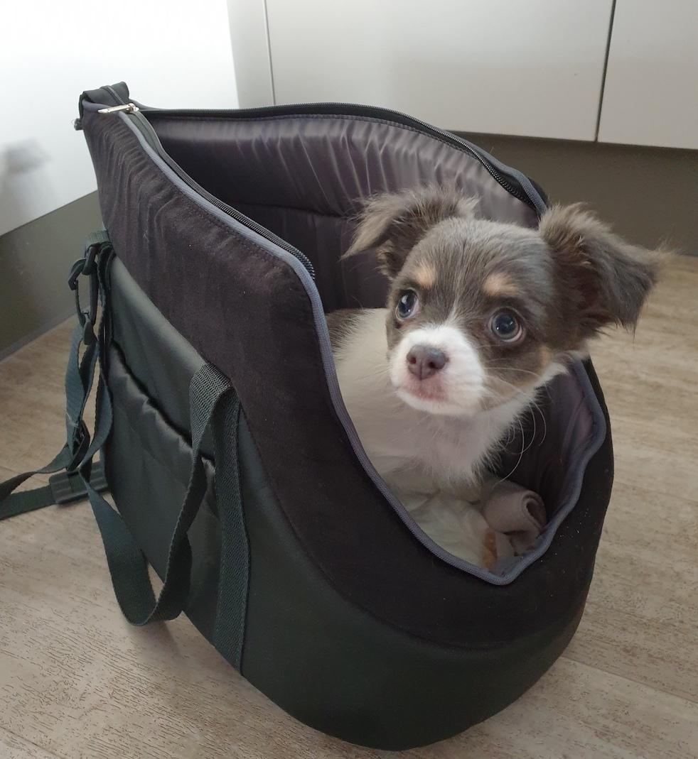 """Cestovní taška pro psa """"BAG"""" černá"""