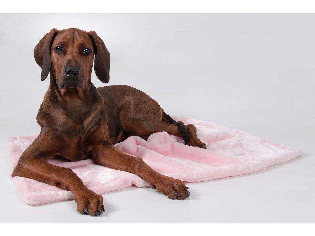 deka pro psa ruzova