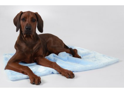deka pro psa modra