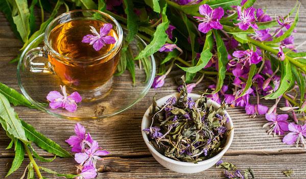 Ivan čaj - elixír života našich předků
