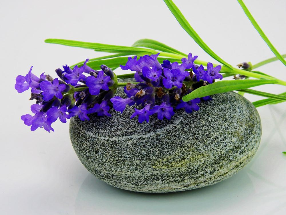 lavender-1573026_1920
