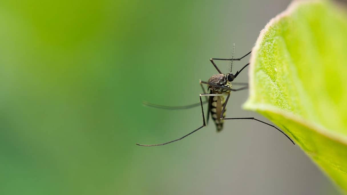 Prečo nás majú komáre tak radi?