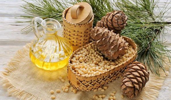 Cédrový olej - od pestovania až po jeho výrobu