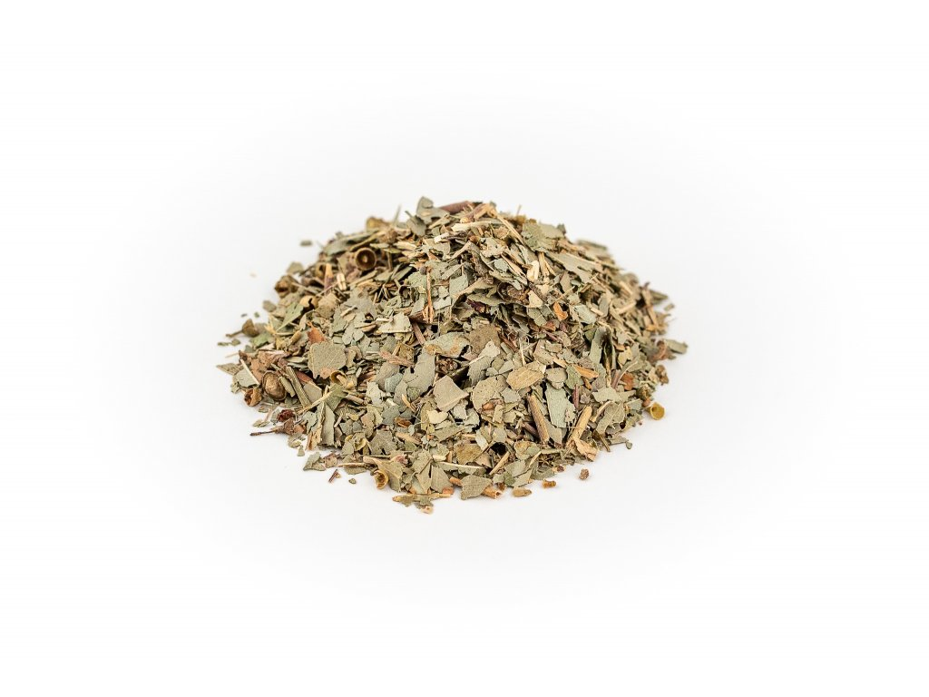eukaliptus list rez