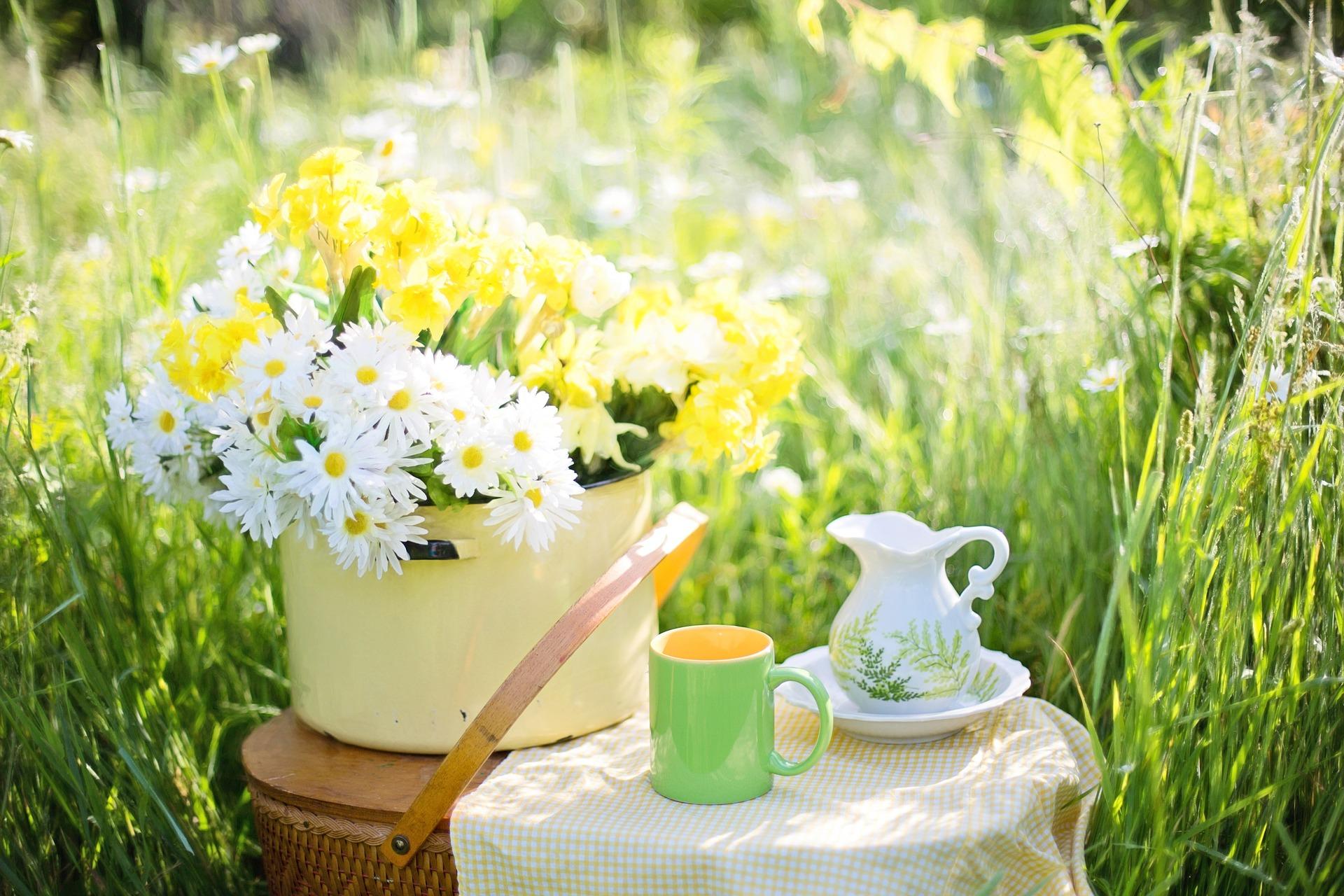 daisies-1466860_1920