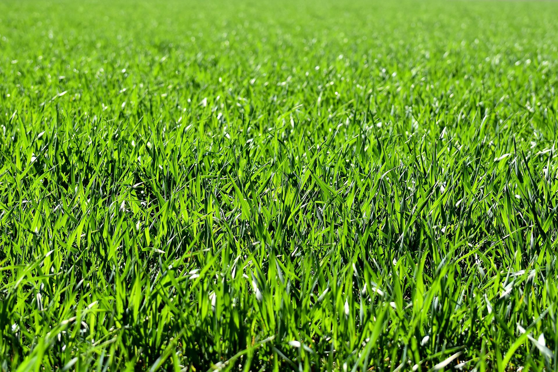 meadow-2184989_1920