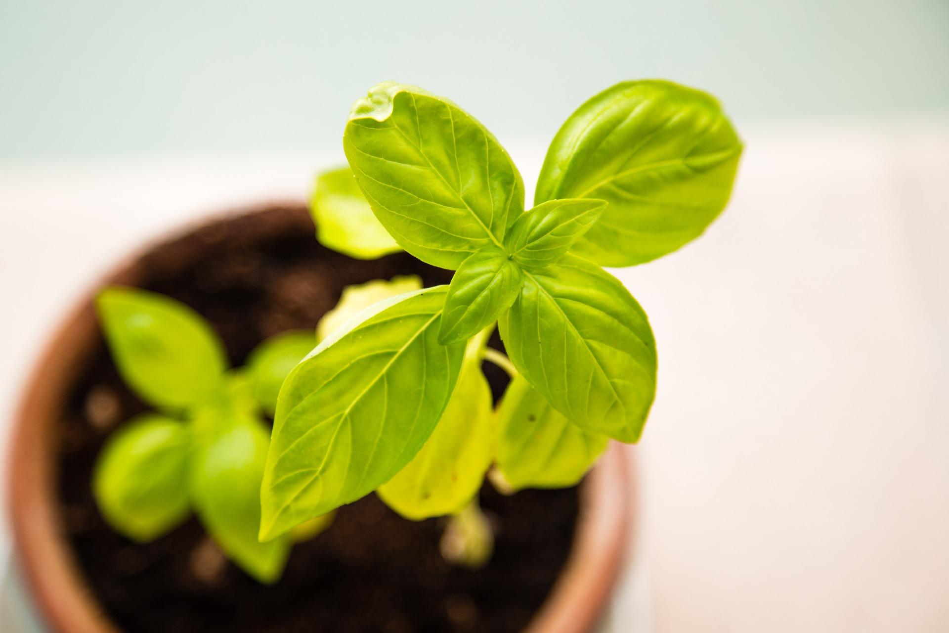 Jaké jsou vývojové fáze rostliny?