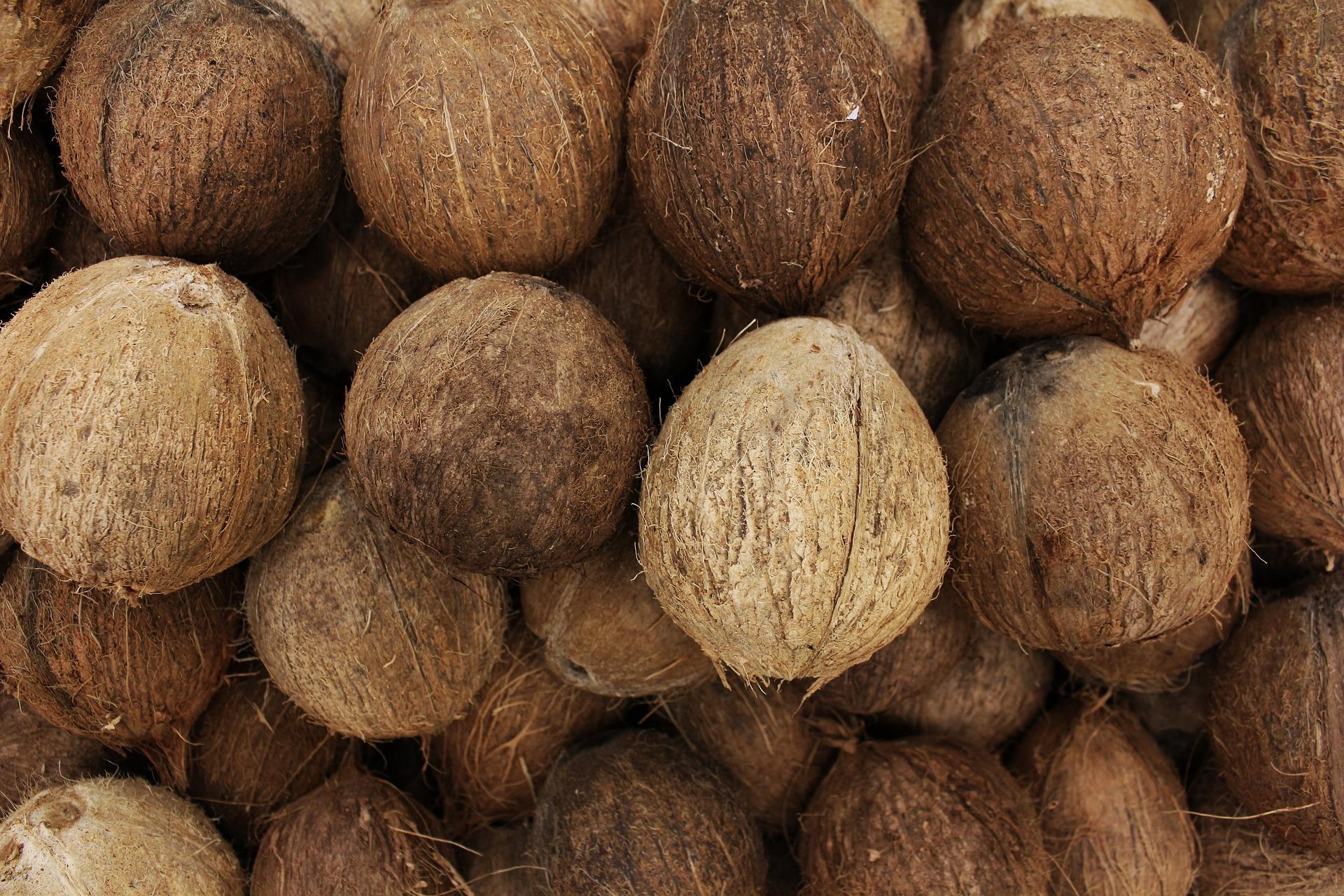 Pěstování v kokosu