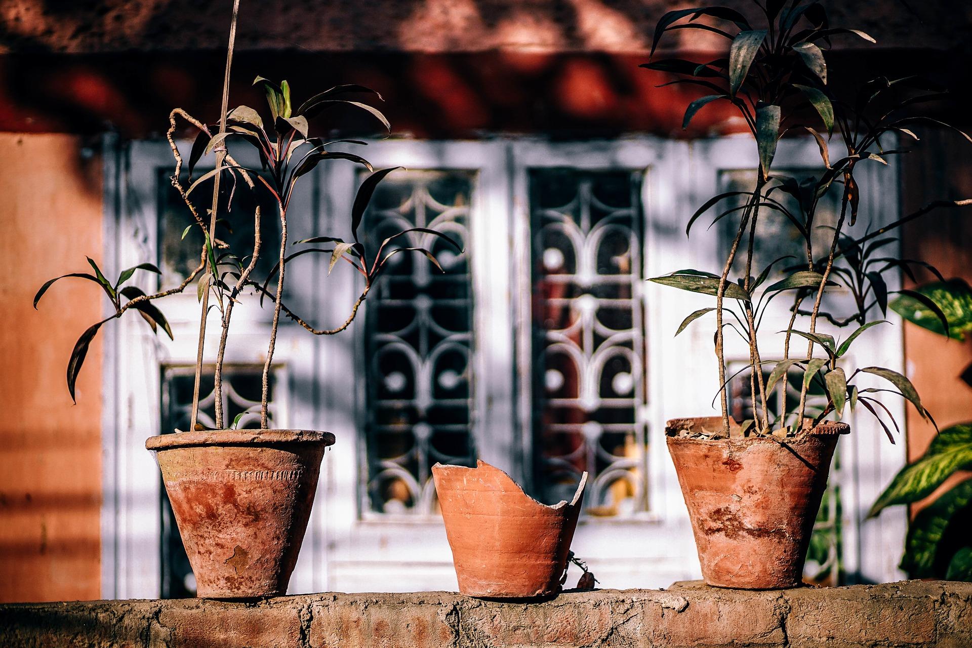 Vyvarujte se nejčastějších chyb při pěstování rostlin