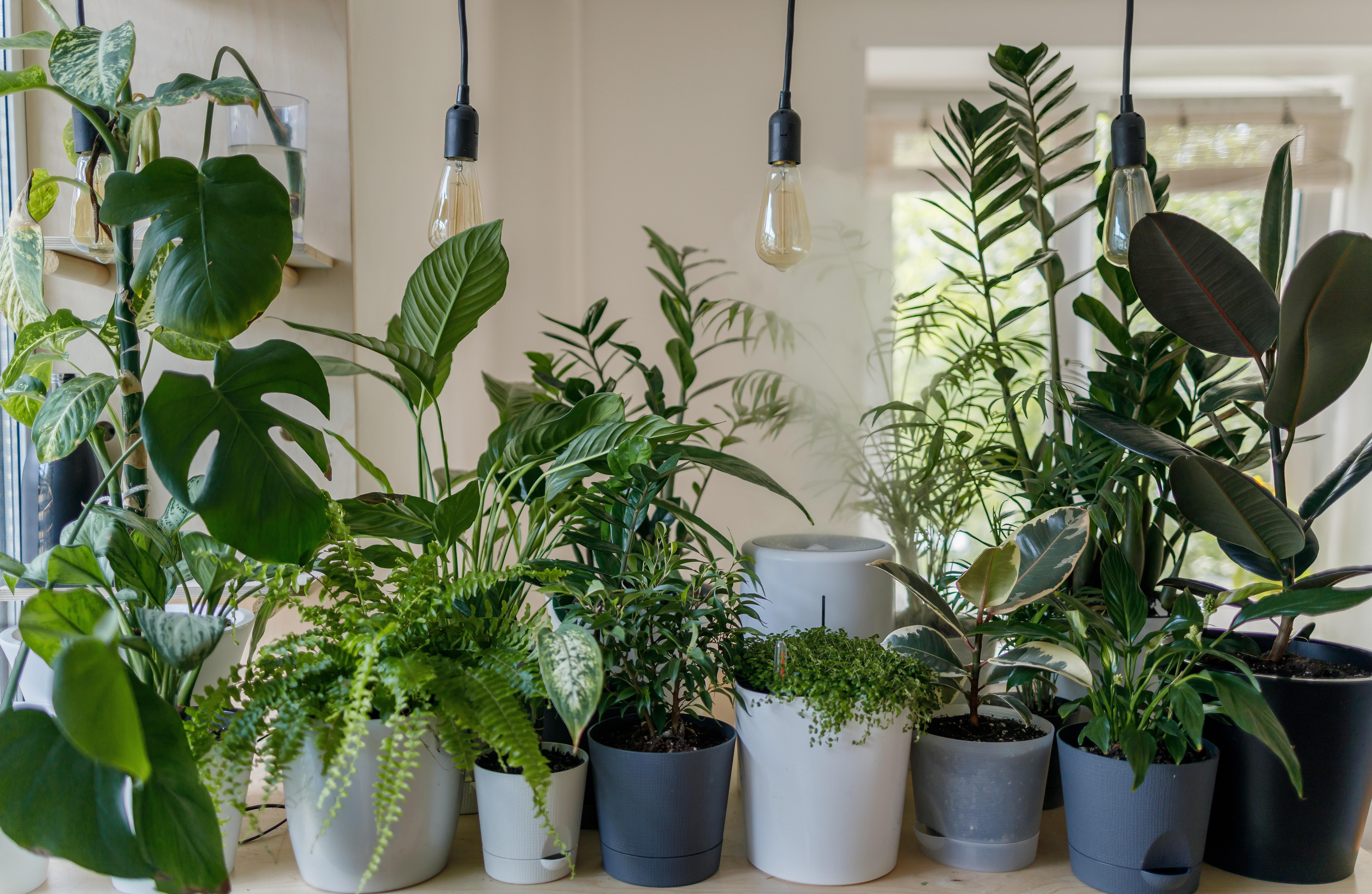 Zima přichází, přitopte a posviťte si na rostliny