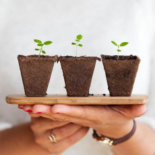 Základní potřeby rostlin