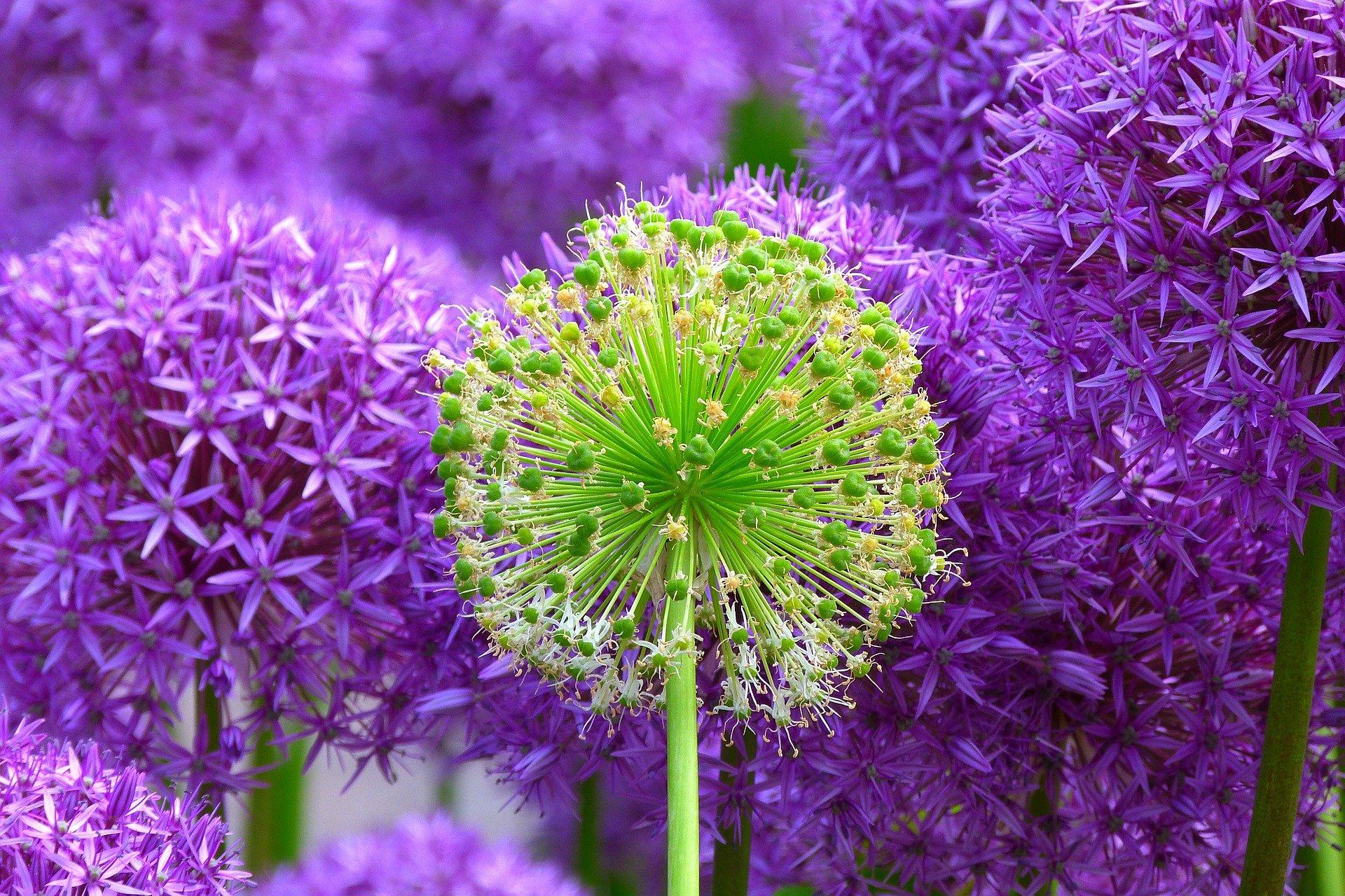 flowers-139356_1920
