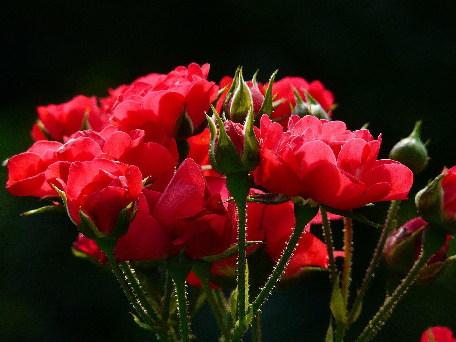 flowers-4232_1920