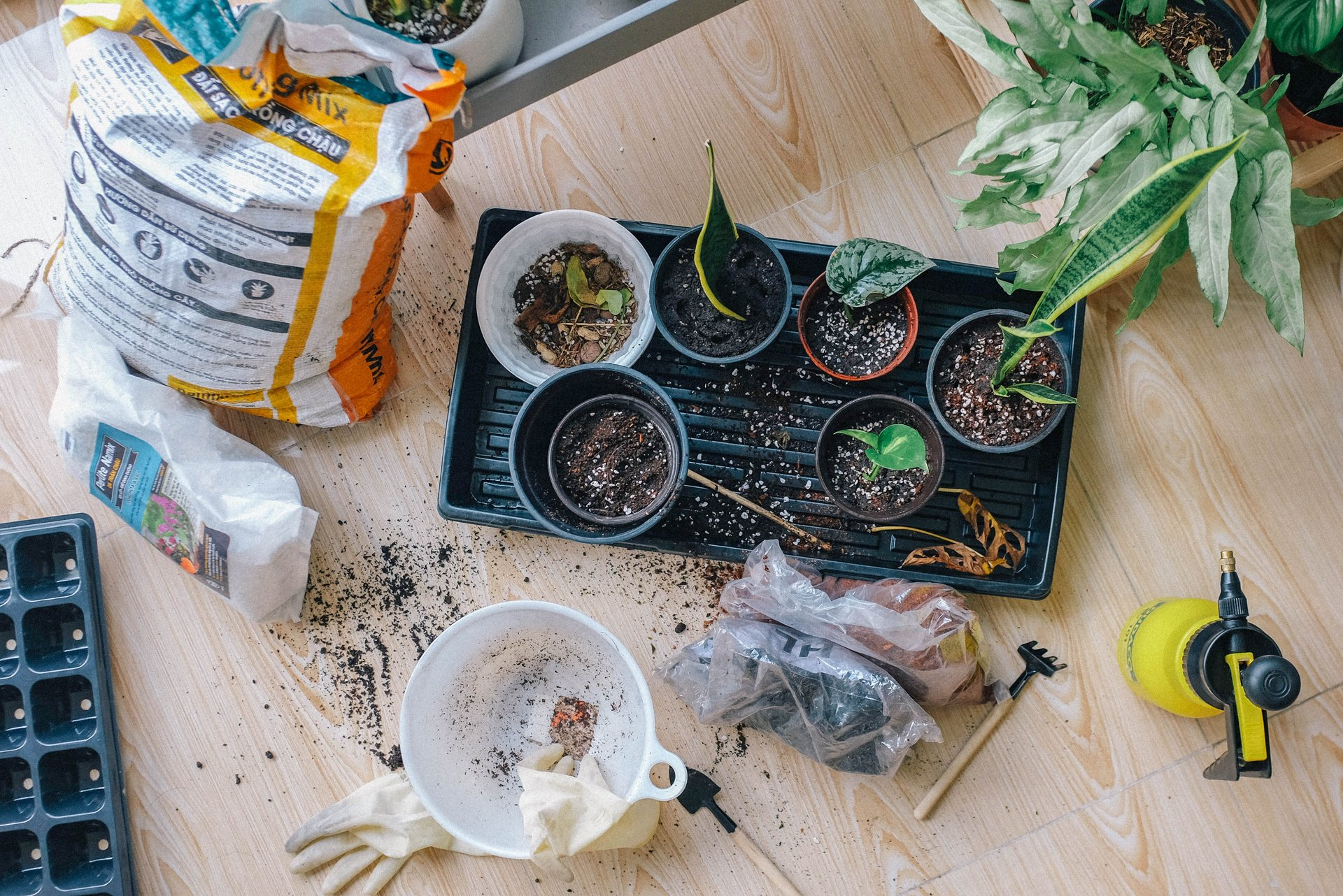 green-leaved-plants-2987081