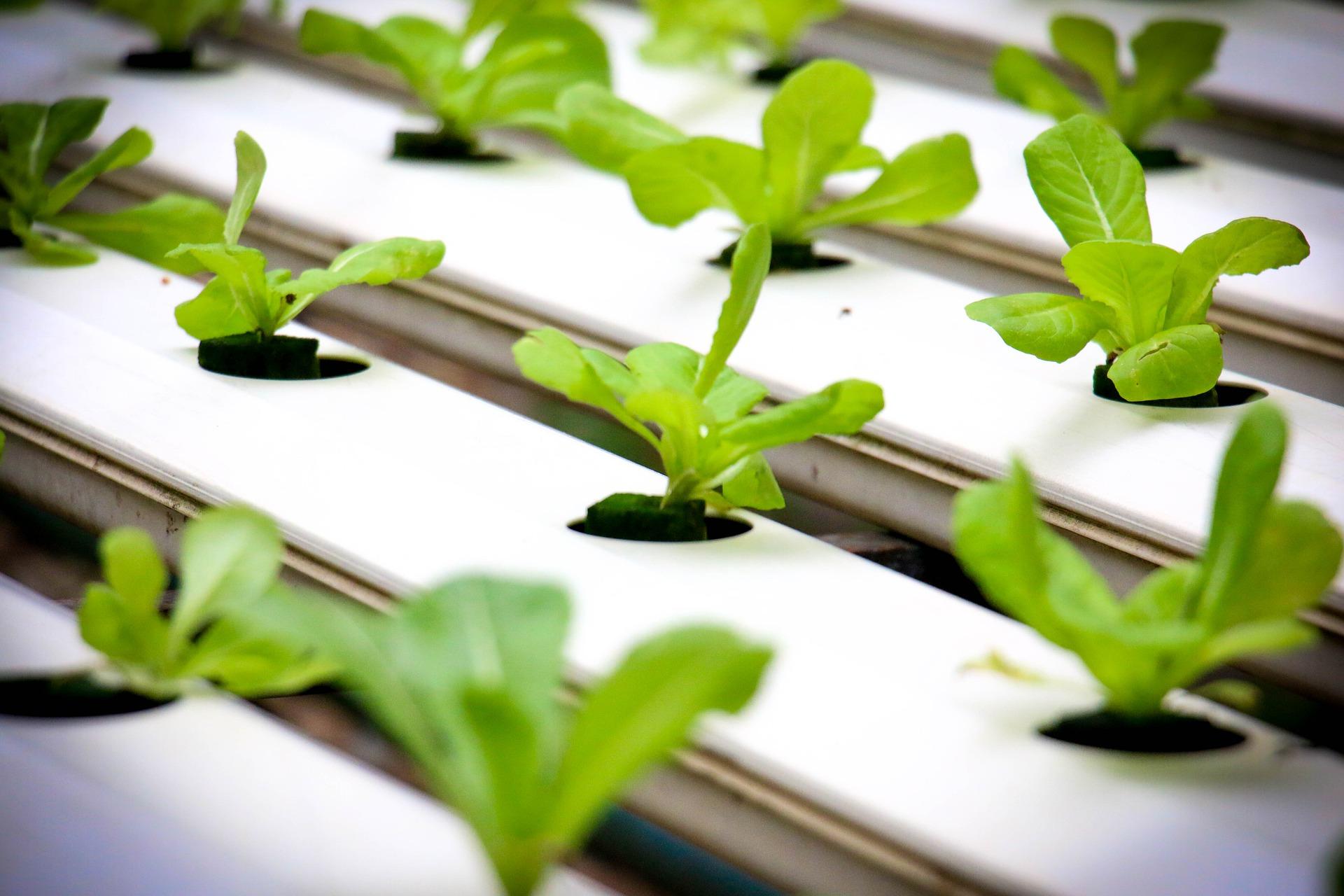 hydroponics-4447702_1920