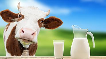 Je mléko špatné pro Vaše zdraví?