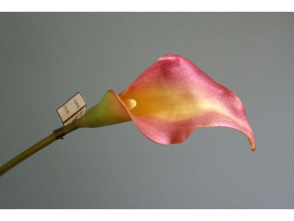 Květina/dekorace kala lososová