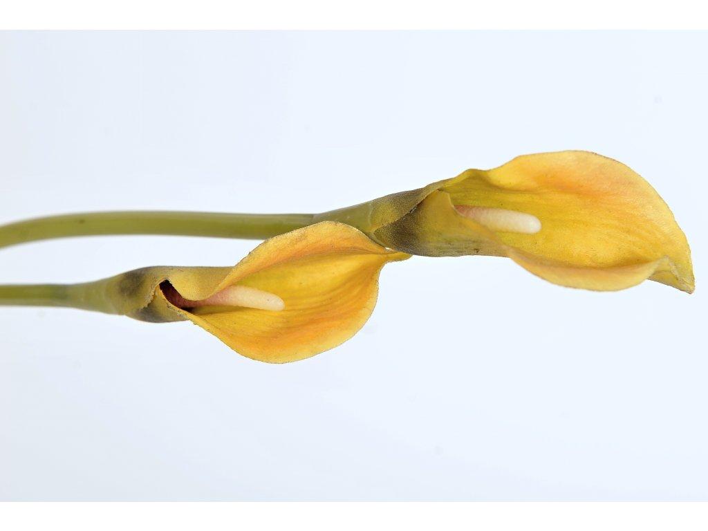 Kala žlutá (5)