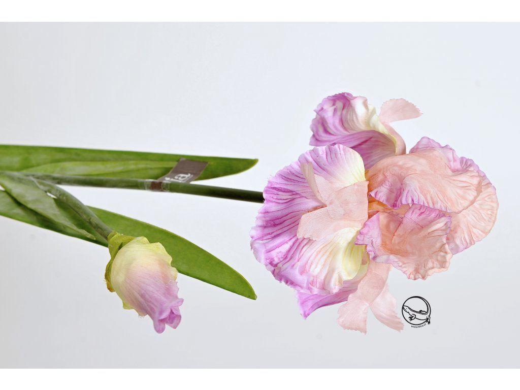 Květina KOSATEC růžový 90cm (2)