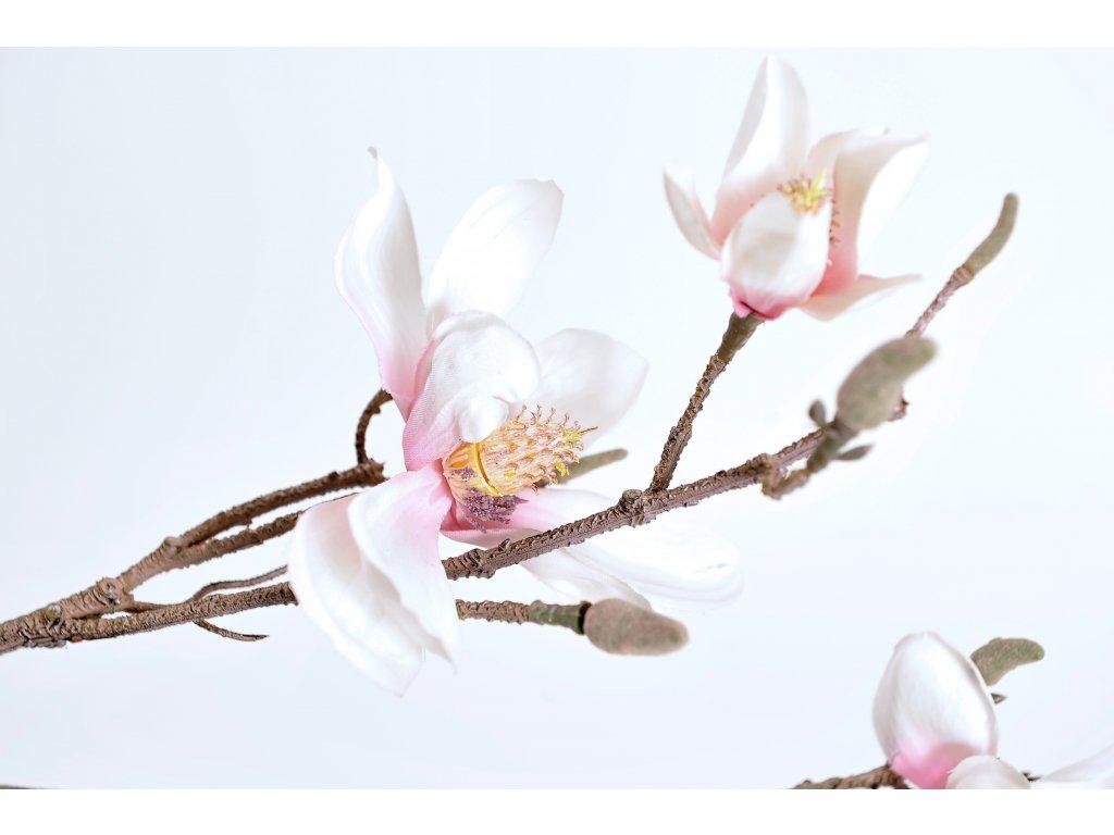 MAGNOLIA květy na kmeni (3)