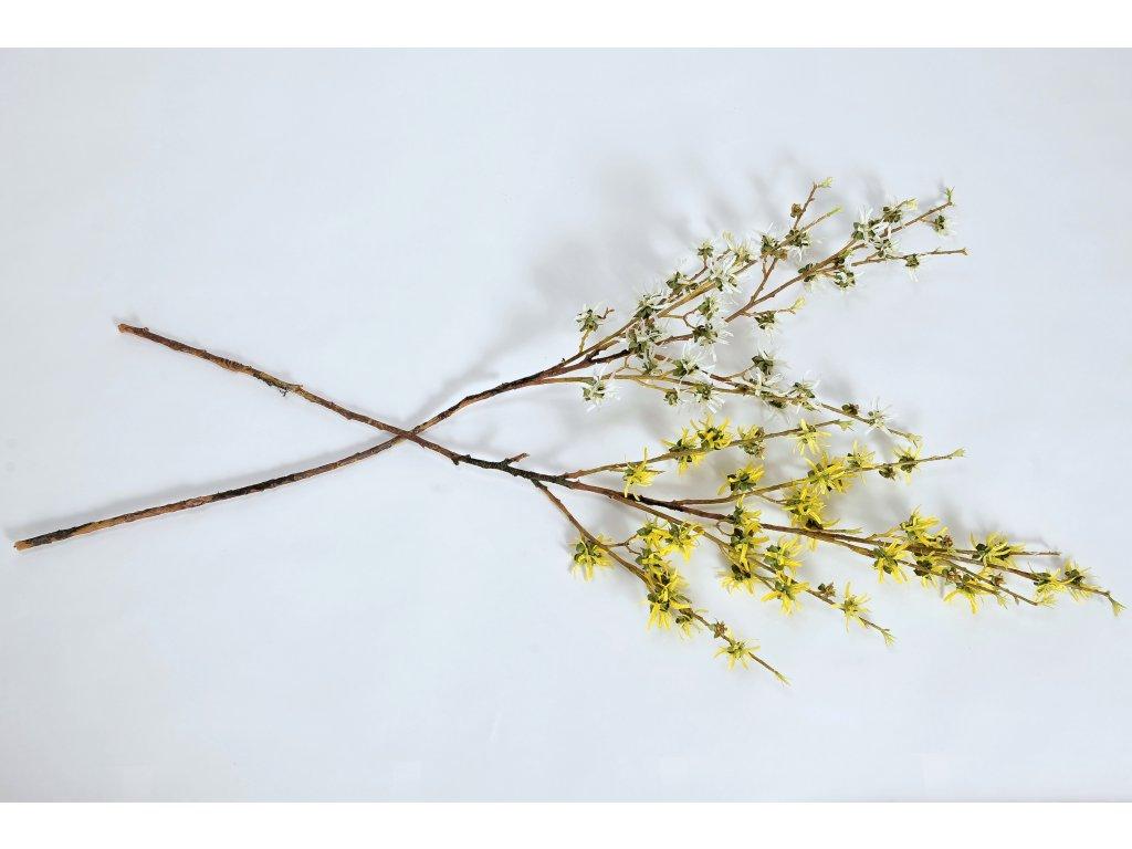 ZLATÝ DÉŠŤ kmen (bílý a žlutý) (2)