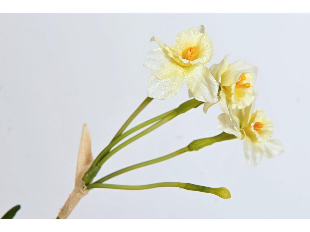 Bílý narcis s cibulkou (1)
