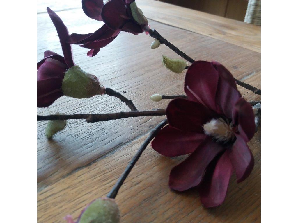 Květina/dekorace magnolie