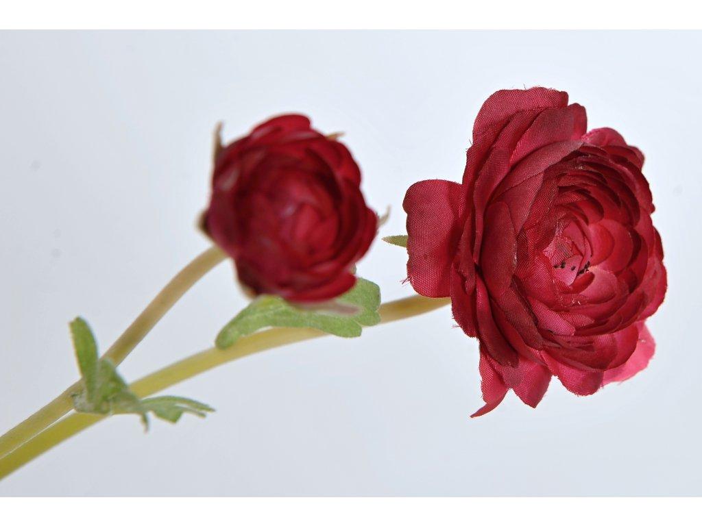 Pryskyřník červený (1)