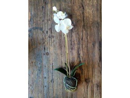 Orchidej v balu bílá