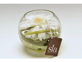 Květina/dekorace rostlina/Phalae - živá voda