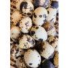 Přírodní věnec křepelčí vejce, květiny