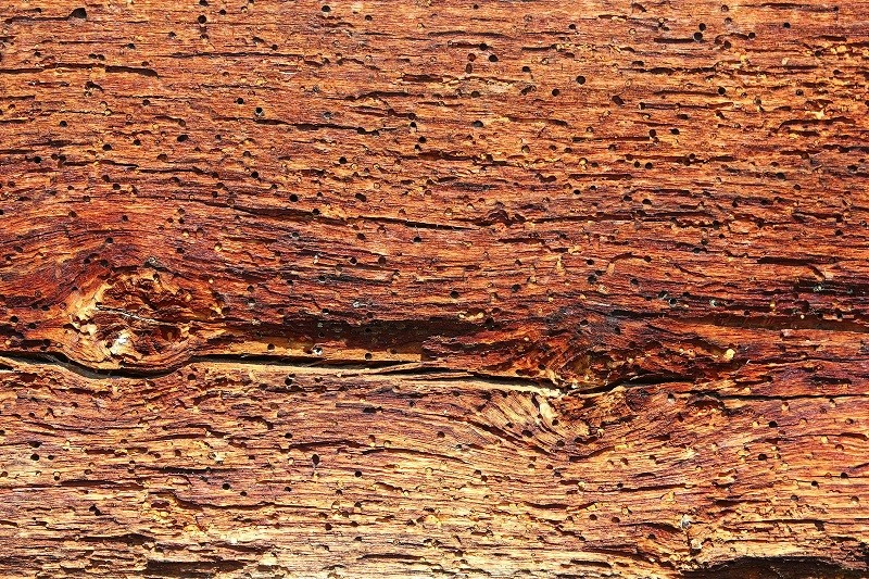 Poznáte dřevokazný hmyz v nábytku? Zjistěte, jak s ním zatočit – 2. díl
