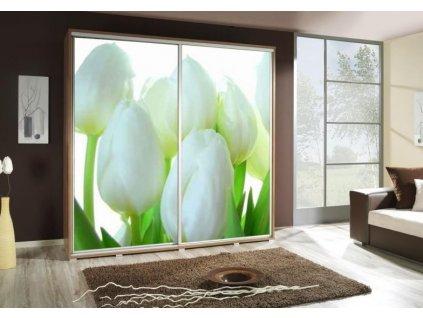 PENELOPA 205 tulipany