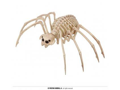 Kostra tarantule 35 x 20 cm