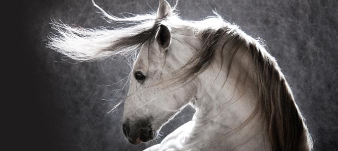 Alergie na plísňové spóry a senný prach u koní
