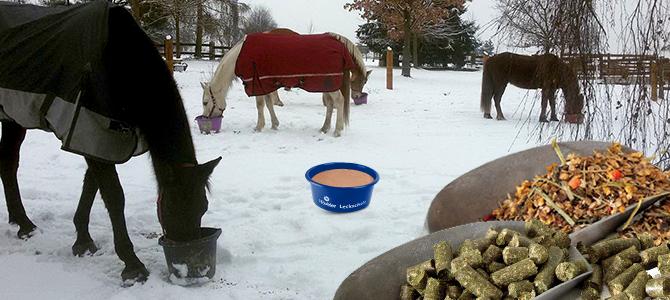 Koně venku