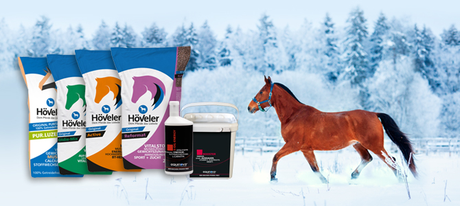 Koně venku v zimním období