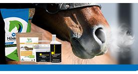 Dýchací cesty u koní jsou v zimě zranitelnější.