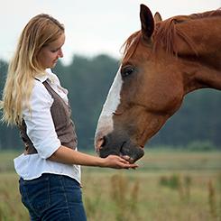 Pamlsky pro koně