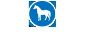 Höveler Czech, krmné směsi a vitaminy pro koně