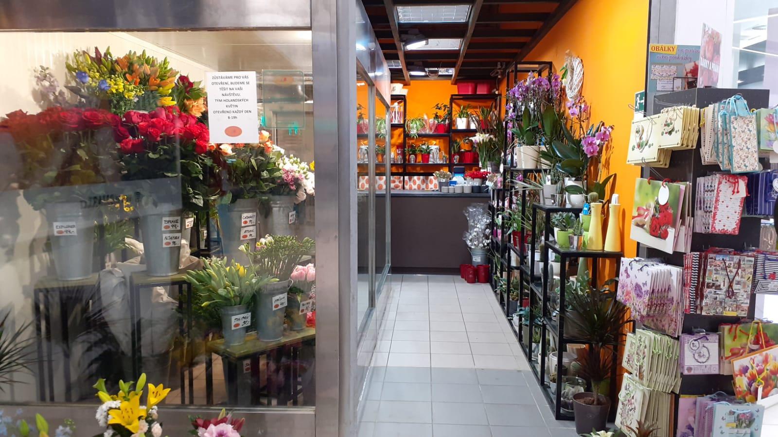 Holandské květiny Mercury Č. Budějovice