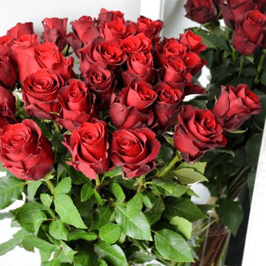 Vše, co jste chtěli vědět o růžích!